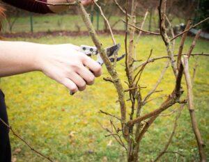 Obstbaumschnitt - Obstbaum Schnitt